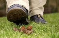 a photo of someone about to tread in dog poo - provided by Keep Britain Tidy