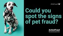 Could you spot the signs of pet fraud